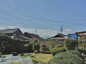 神戸市伐採