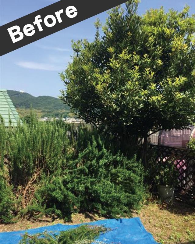 高知市の庭木伐採抜根-施工前写真
