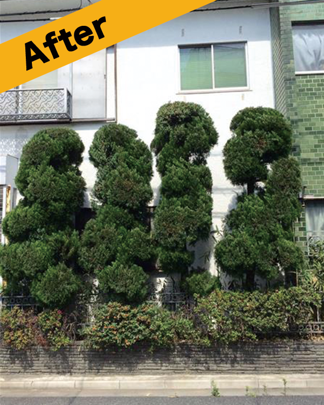 倉吉市で植木の剪定後