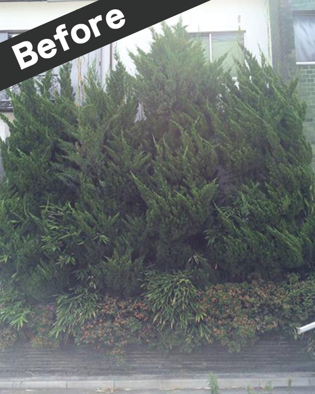 倉吉市で植木の剪定前