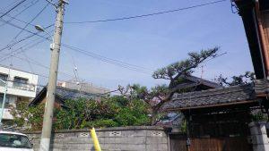 長浜市お庭のお手入れ事例