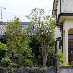 和歌山市で庭木の剪定後